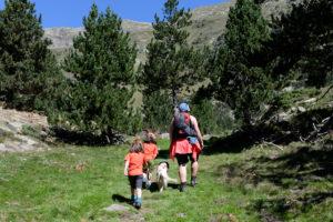Bosque de Pino negro en Villamuerta